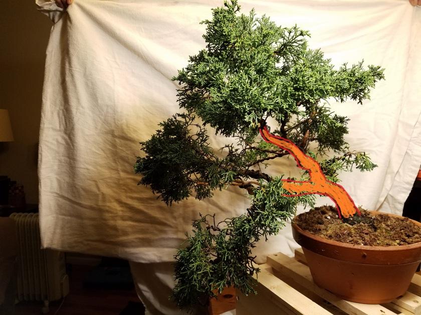 juniper trunk line