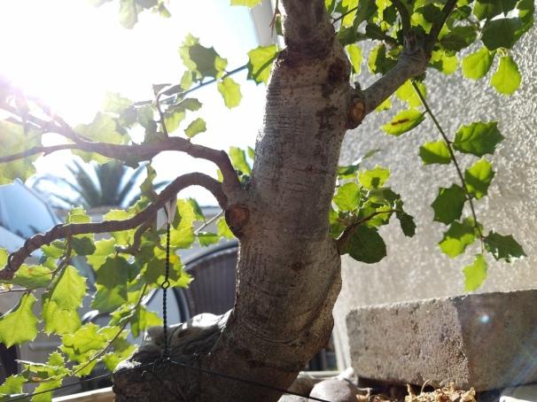 oak structure